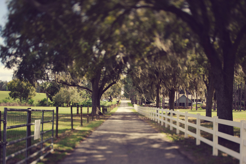 Lange Farm: road