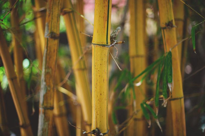 anna maria island wedding: bamboo