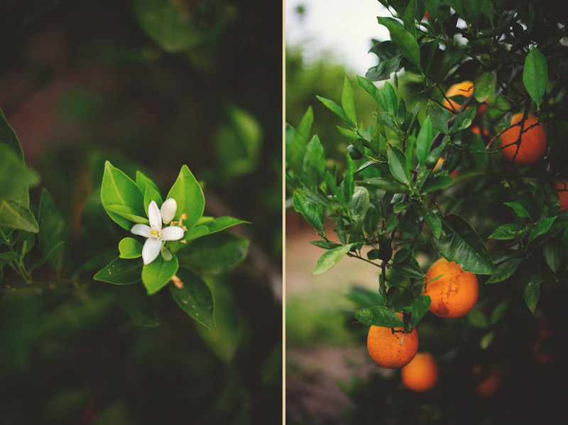 showcase-of-citrus010
