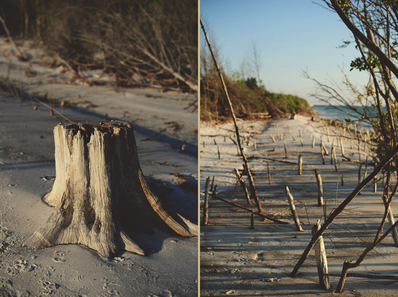 romantic driftwood beach engagement session: drfitwood