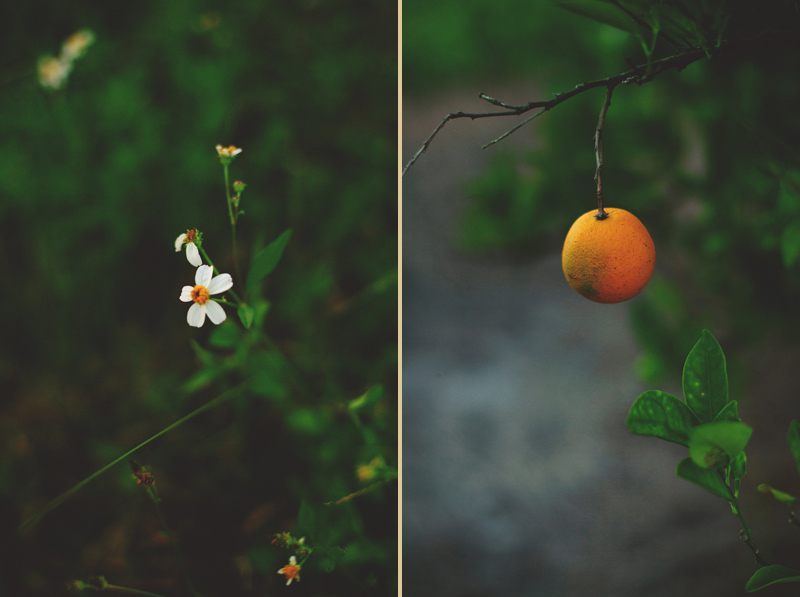 romantic-woodsy-farm-engagement-jason-mize-042