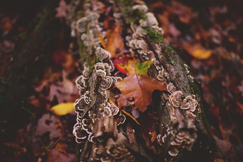 hocking hills engagement: fall in ohio