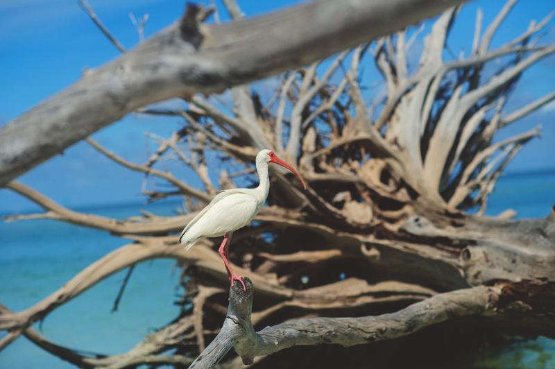 boho-beach-engagement-photos-0027