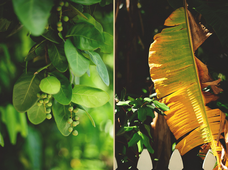 romantic sundy house wedding: plants