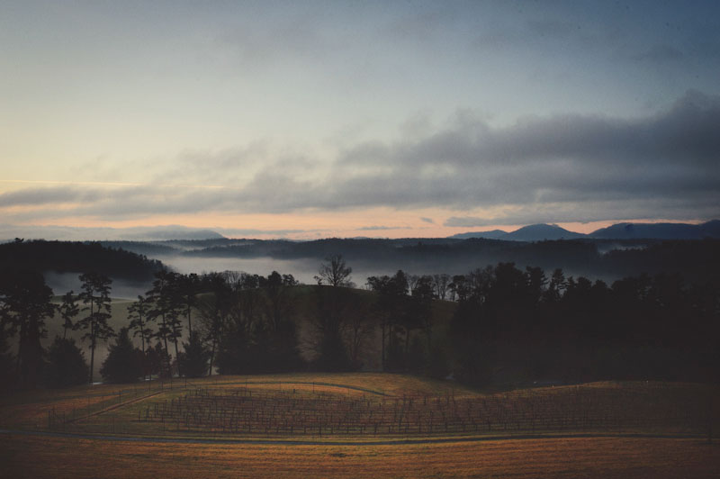 Biltmore Estate Wedding: fog