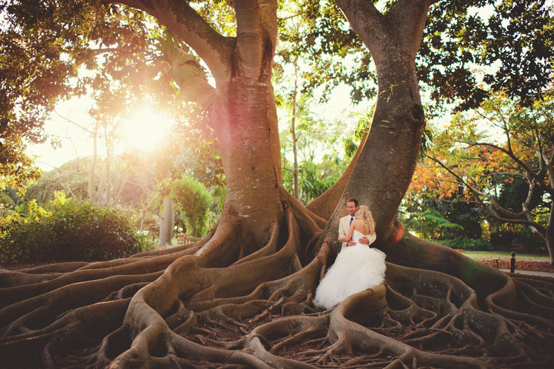 selby gardens wedding: big tree