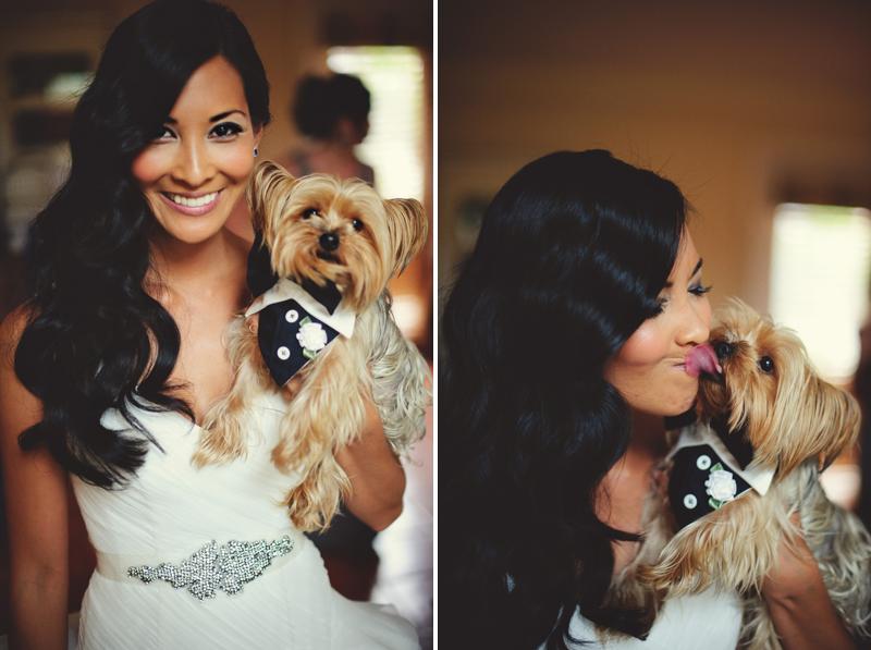 yorkie dog with bride