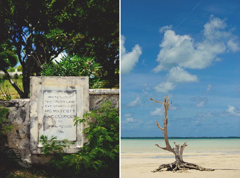 Harbour Island Wedding: lone tree
