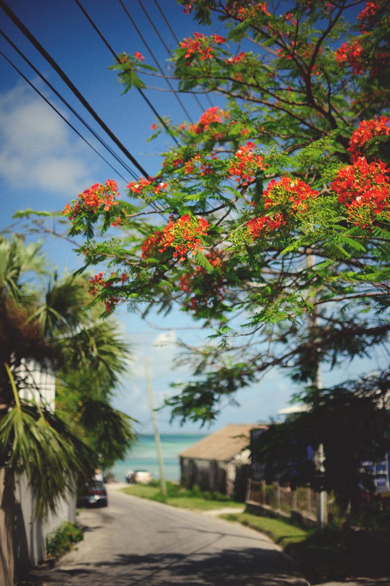 Harbour Island Wedding: orange tree