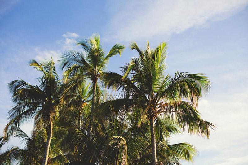 naples backyard beach wedding: palm trees