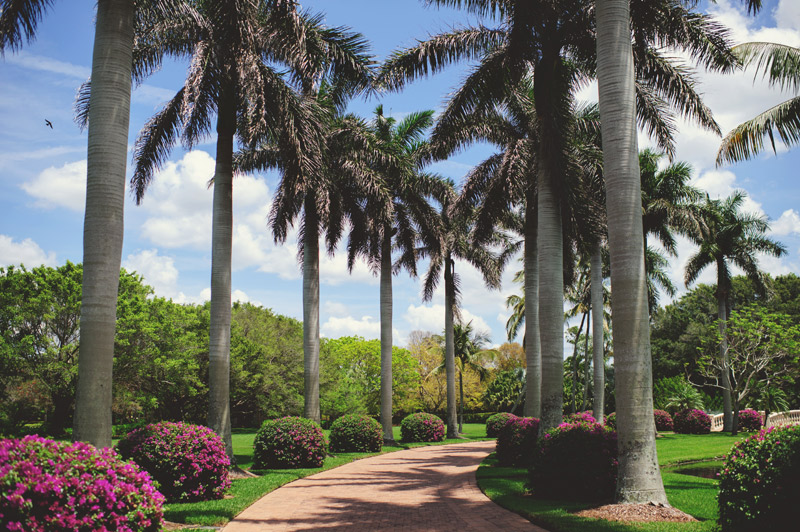 naples backyard beach wedding: driveway with palm trees