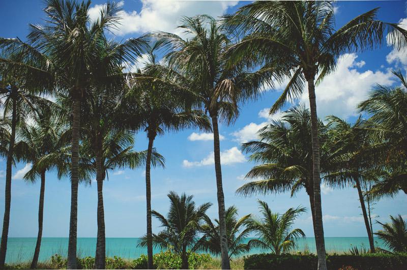 naples backyard beach wedding: palm trees, ocean