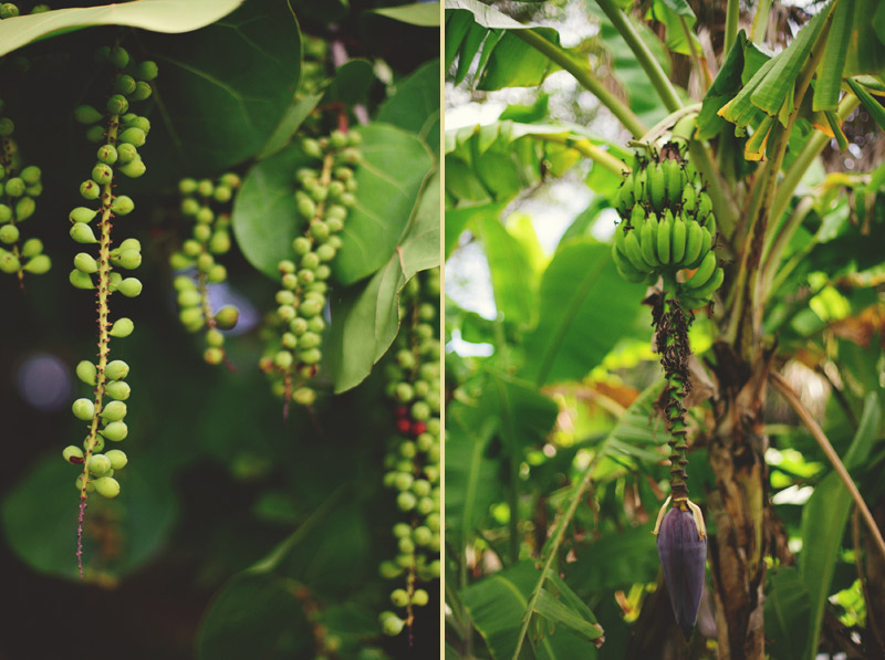 casa ybel resort wedding: sea grapes
