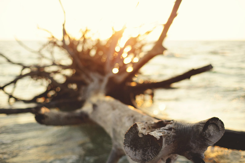 romantic-driftwood-beach-engagement-session-088