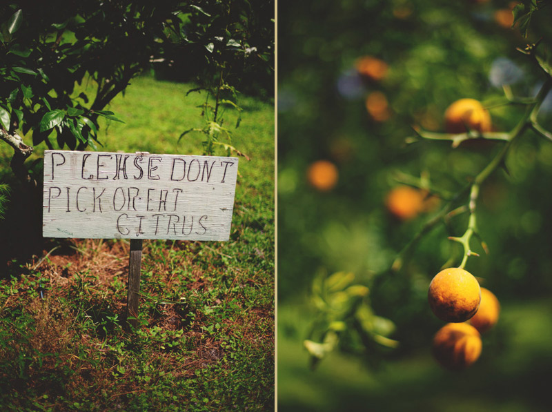 the glen venue wedding: citrus trees