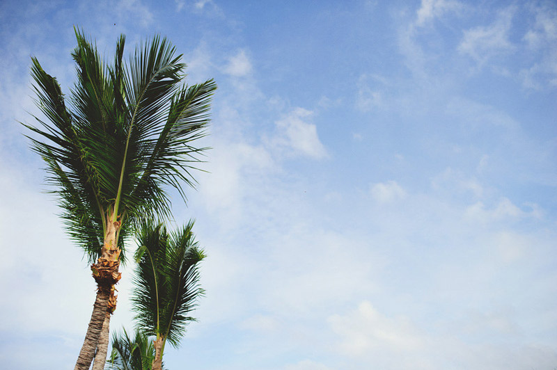 harbour island bahamas wedding: palm tree