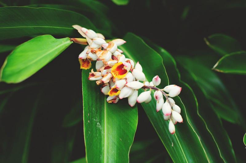 modern-vintage-selby-gardens-wedding-jason-mize-038