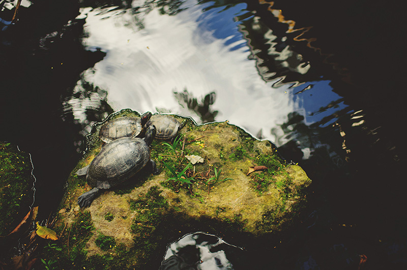 romantic sundy house wedding: turtles