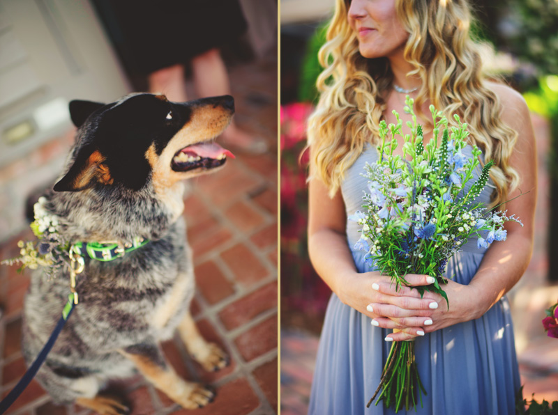boho backyard wedding naples: dog and bridesmaid