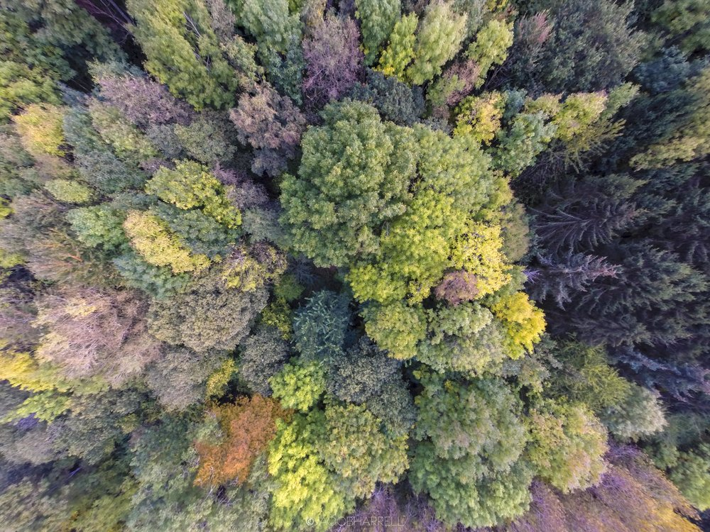 21_10_16_Drone_Hayles_wood_pics-43.jpg