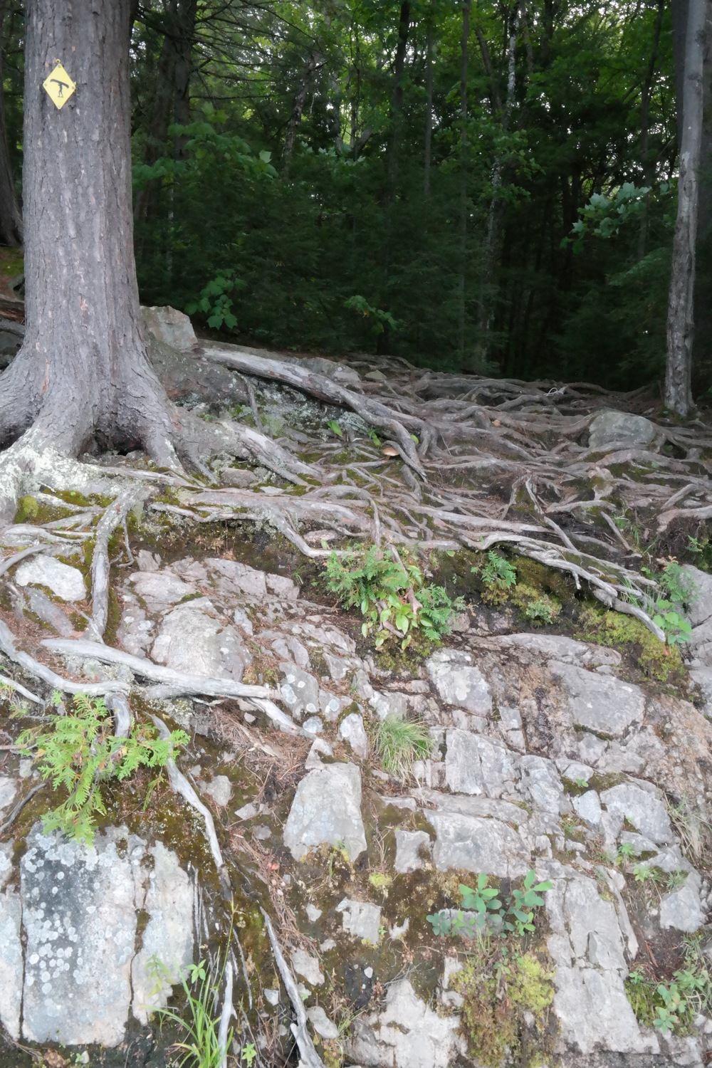Steep portage. Awesome roots.