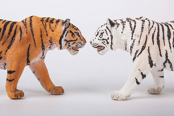 Tiger and Snow Tiger