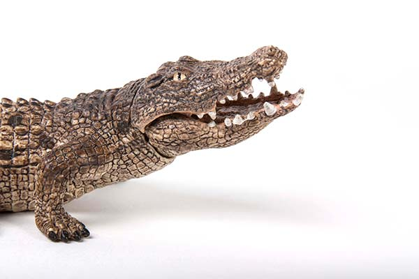 Alligator with jaw that opens and closes