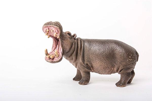 hippo-72w.jpg