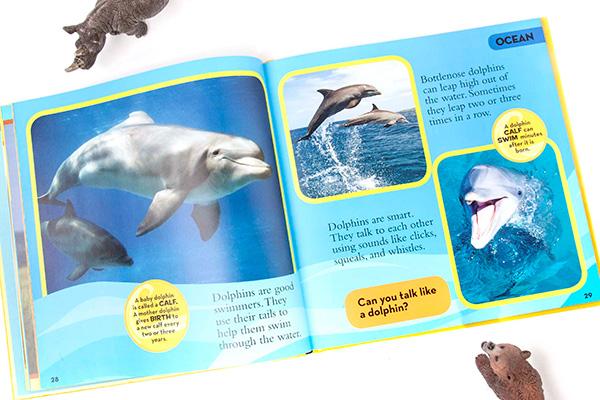 dolphins2-72w.jpg