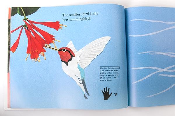 hummingbird-72w.jpg