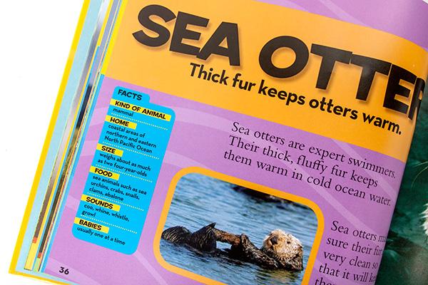sea-otter-72w.jpg