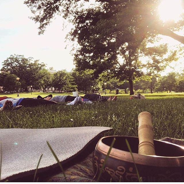 Visit Vasu Tribe in Bushnell Park at 5:30pm for FREE yoga with X! 🌲🌲🌿🌿🌲🌲
