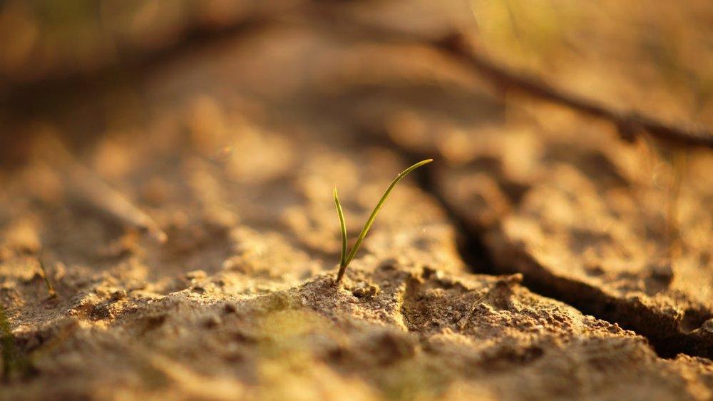 dry_life.jpg