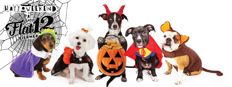 trick or treat halloween pet parade costume contest