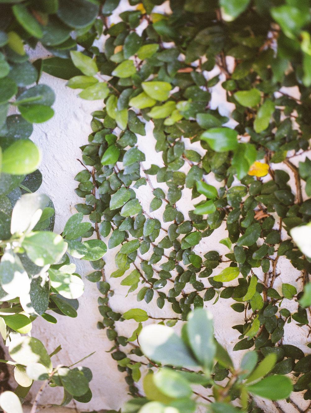 Miami-film-photography-jessica-bellinger-028.jpg