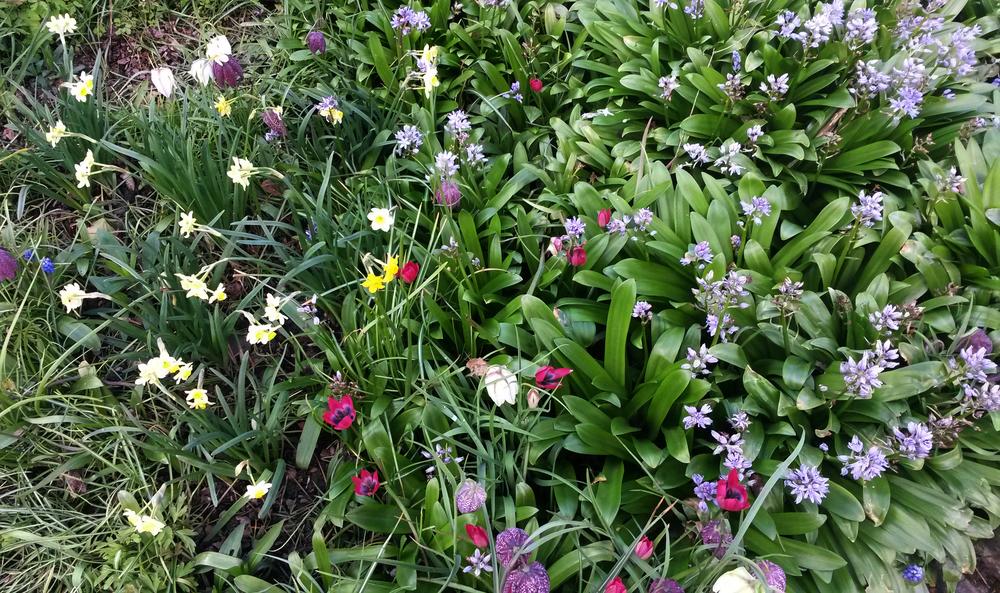 Sissinghurst spring.jpg