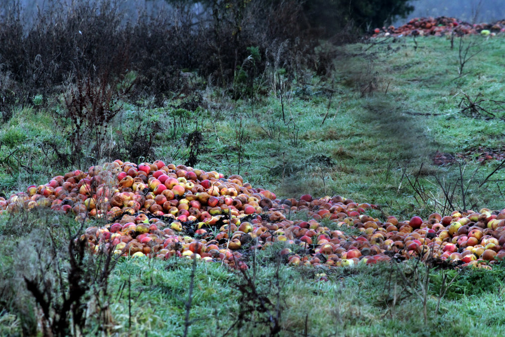 apple graveyard 01.jpg