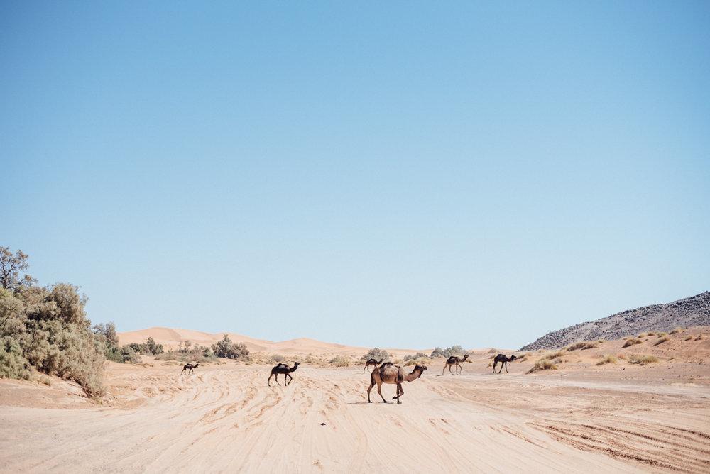 Sahara -29.jpg
