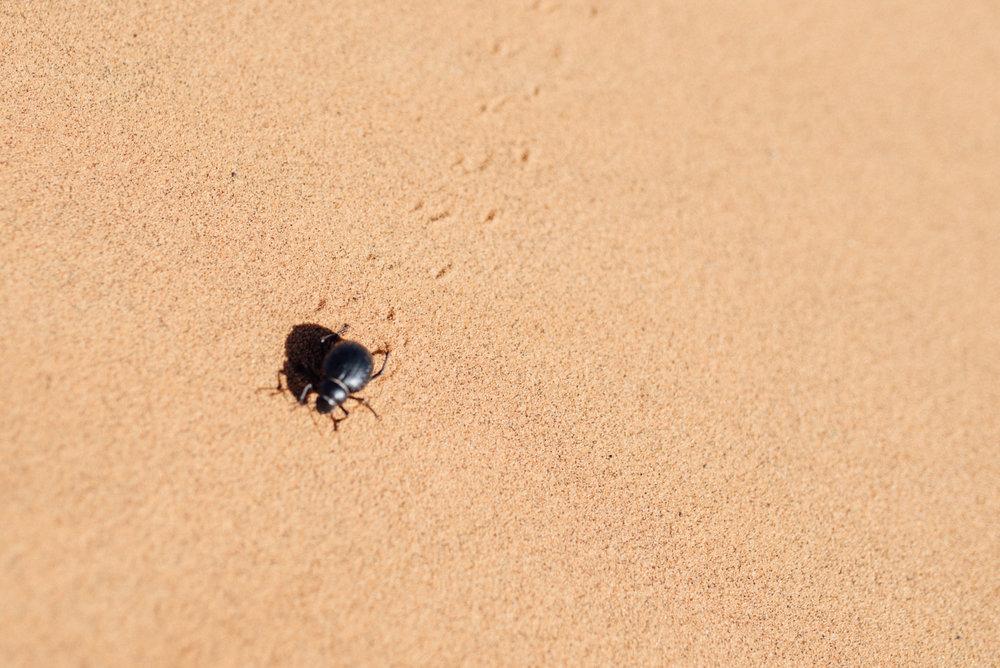 Sahara -36.jpg