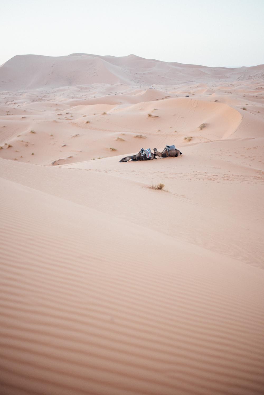 Sahara -60.jpg