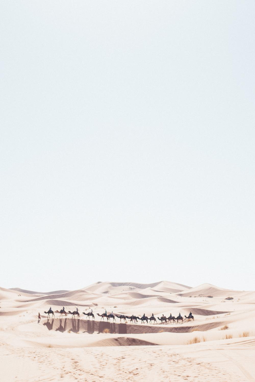 Sahara -69.jpg