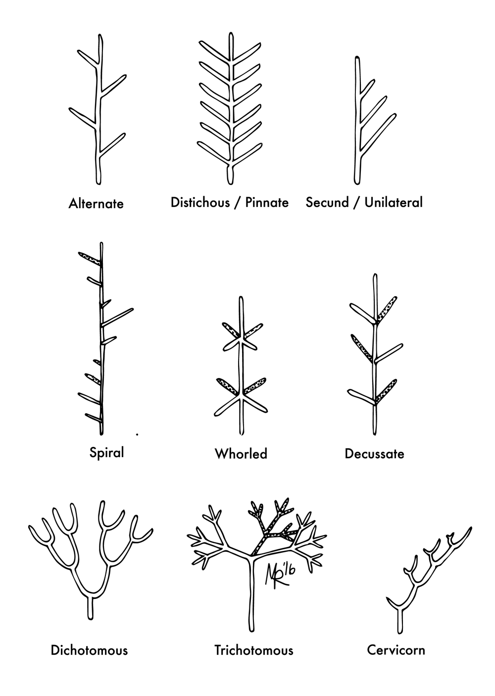 Branching Patterns