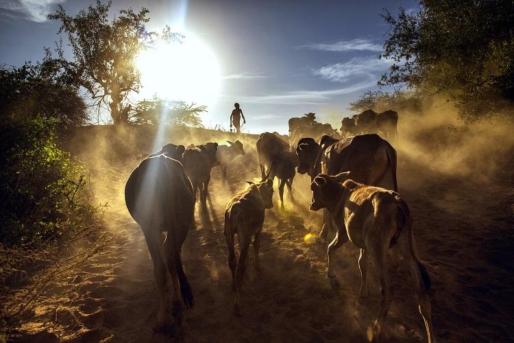 South Rift Climate Change by Georgina Goodwin via UBUNTU Blog
