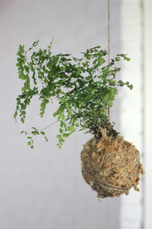 kokedama-hanging-string-garden6-682x1024.jpg