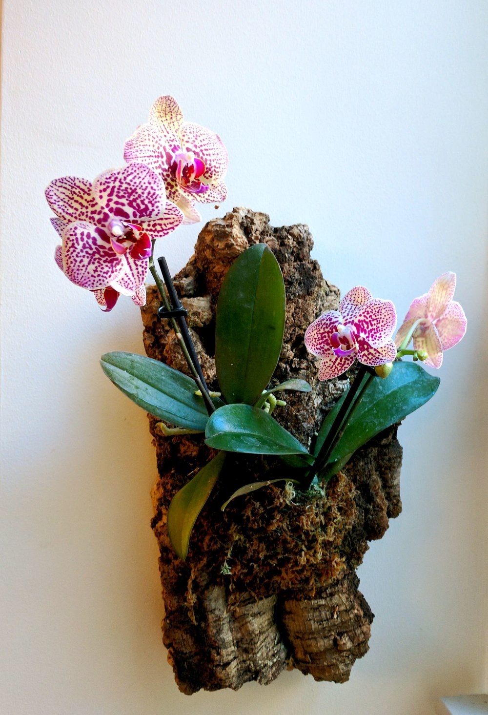 mounted-orchids.jpg