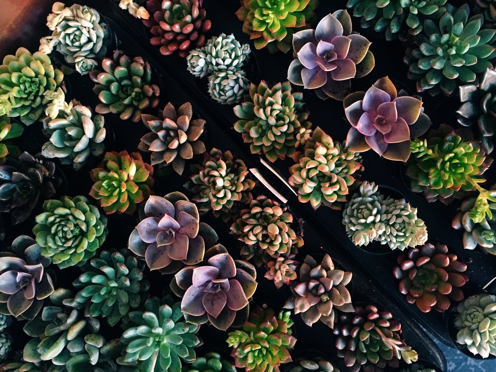succulents.jpeg