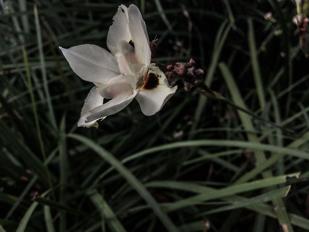 Flower_01of01.jpg