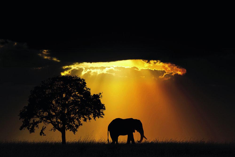 Majestic Elephant _ RIYA SHARMA.jpg