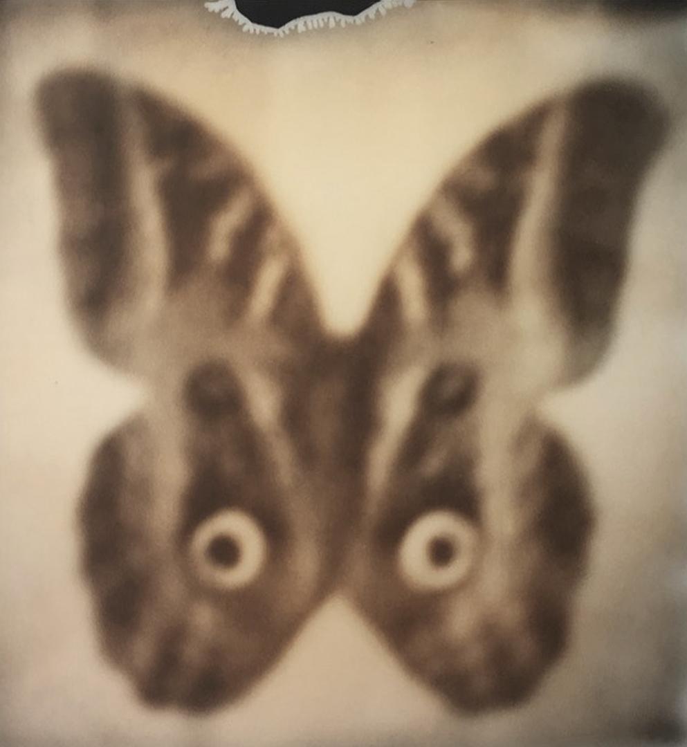 10_CatherineJust_Moth_Medicine.jpg
