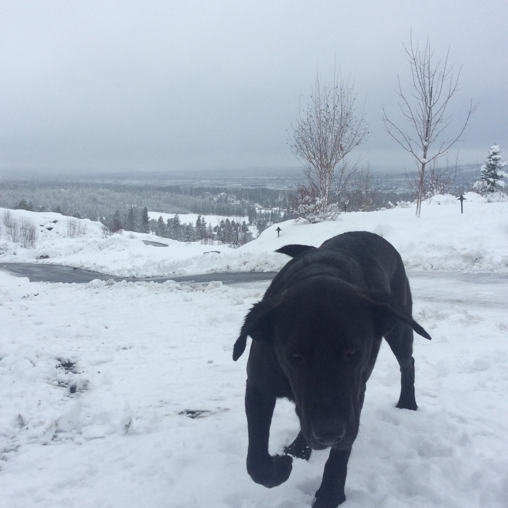 My Dog: Flint